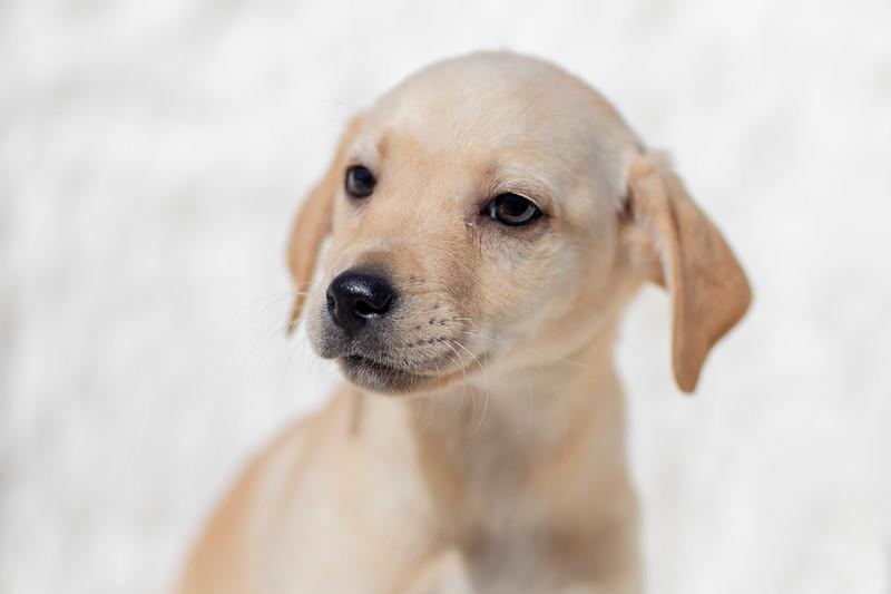 blonde-pup-b1