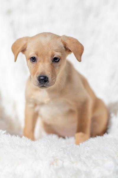 blonde-pup5