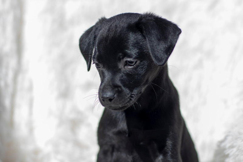 black-pup1