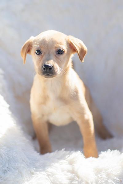 blonde-pup8