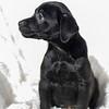 black-pup-b3