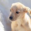 blonde-pup9