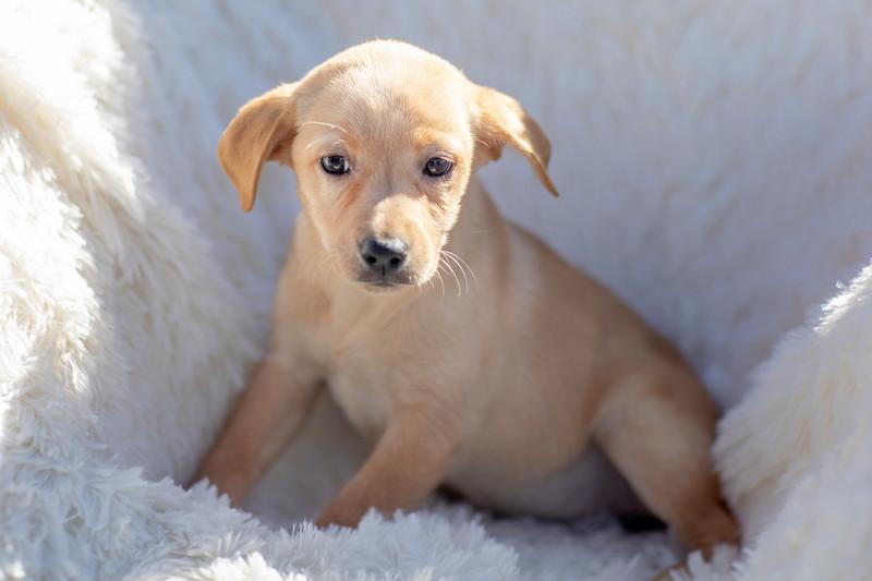 blonde-pup10