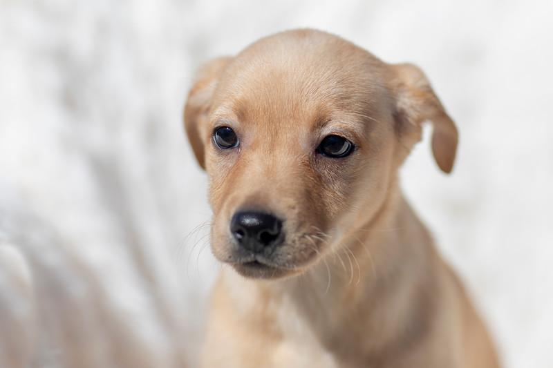 blonde-pup2