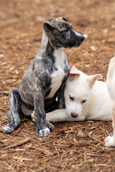 snuggle-puppies1