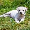 white-puppy10