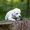white-puppy2