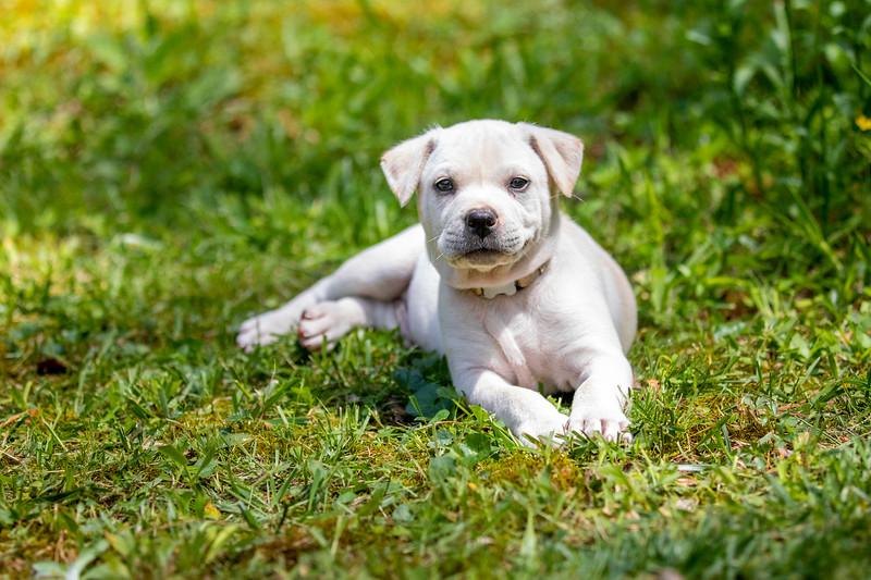 white-puppy1