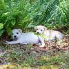 white-puppy3