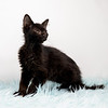 scruffy-black3