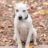 blonde-boy-hound5