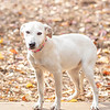 blonde-girl-hound1