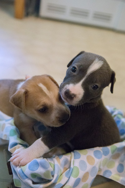 puppies-box