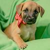 puppy1f
