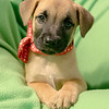 puppy1d