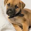 puppy2f