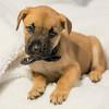 puppy2d