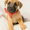 puppy1h