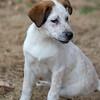pup-a5