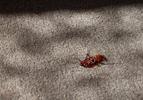 Found this on my hotel room floor one afternoon.
