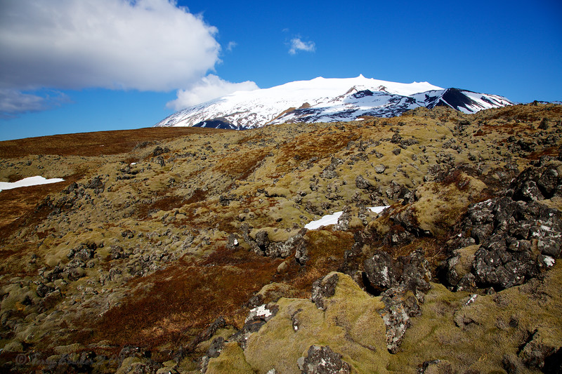 SnaefellsJokull and Lava Fields covered in moss