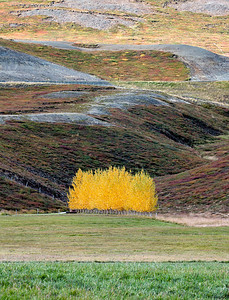 Golden Trees near Goðafoss