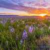 Camas Marsh Sunrise