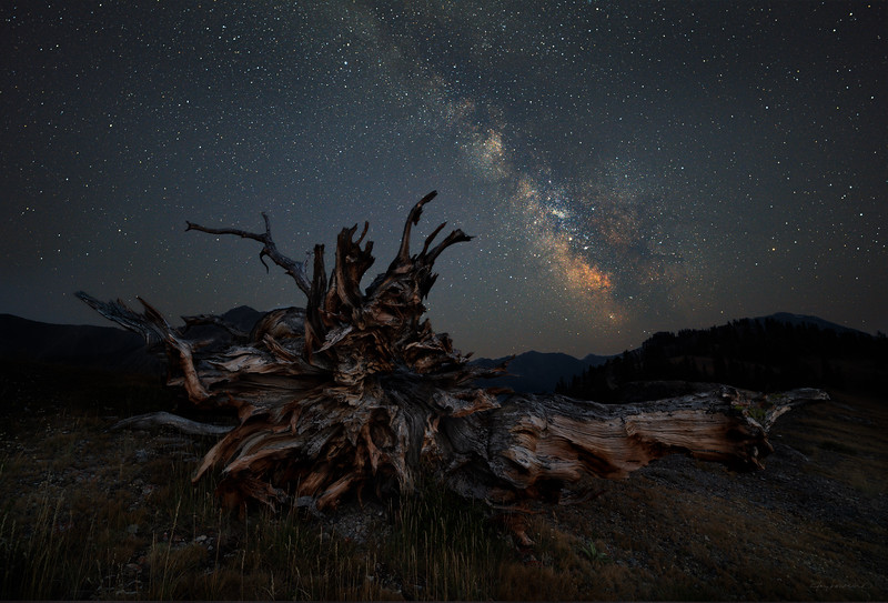 Ancient Pine and Milky Way