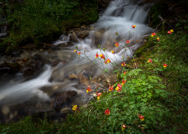 Columbine and  Stream