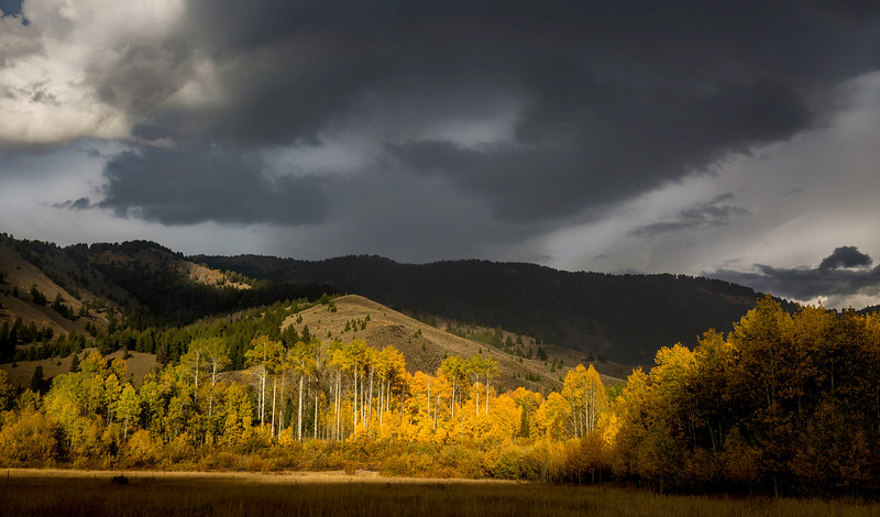 Fall Aspens and Dark Skies