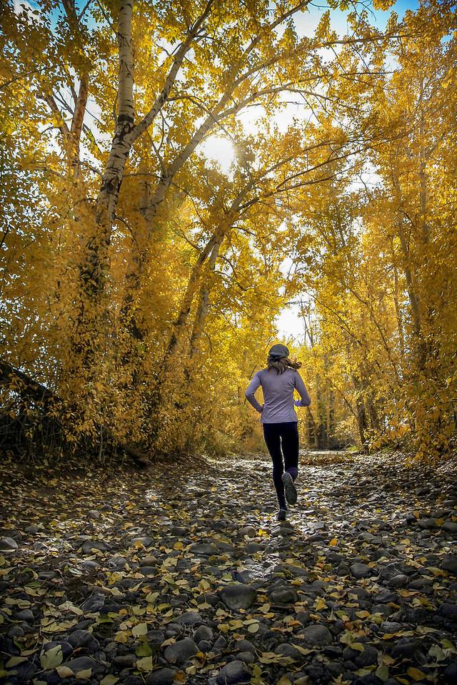 Dry Canal Run in Fall, Bellevue