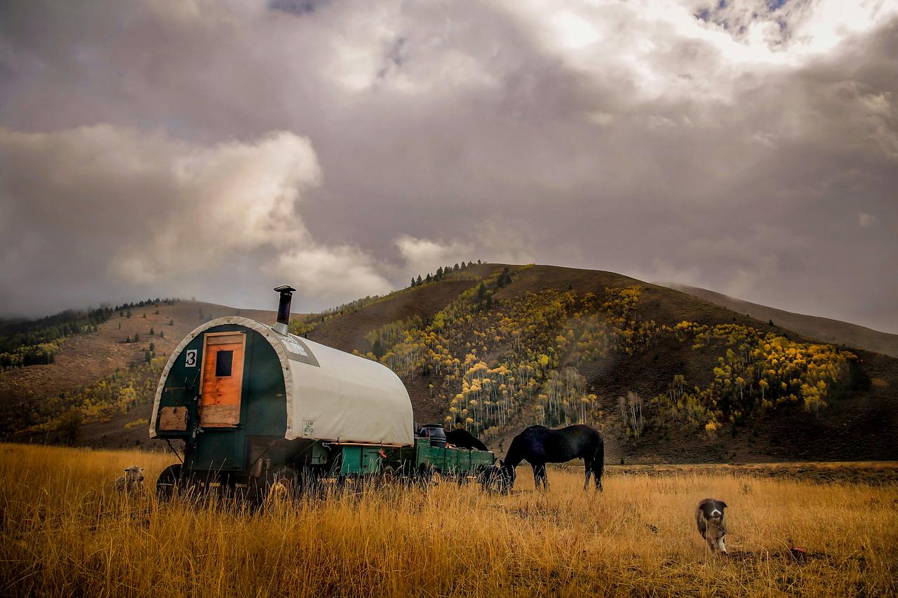 Lake Creek Sheepwagon and Dog, Ketchum
