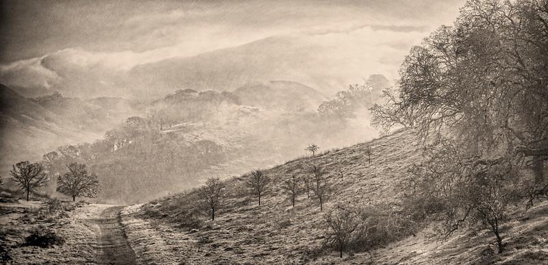 Foggy Winter Morning, Shell Ridge, Walnut Creek, CA