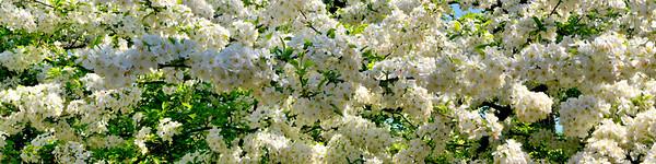 SB-1-M   Spring Blossoms 1   2'x 8'