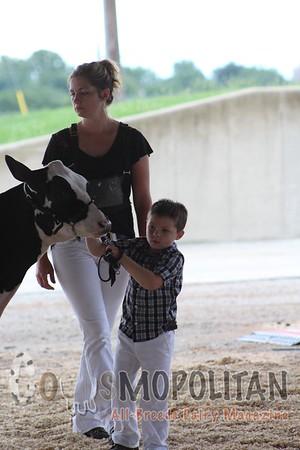 IL State Holstein Heifers 16