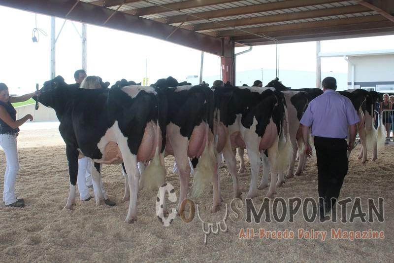IL State Holstein Show 2016