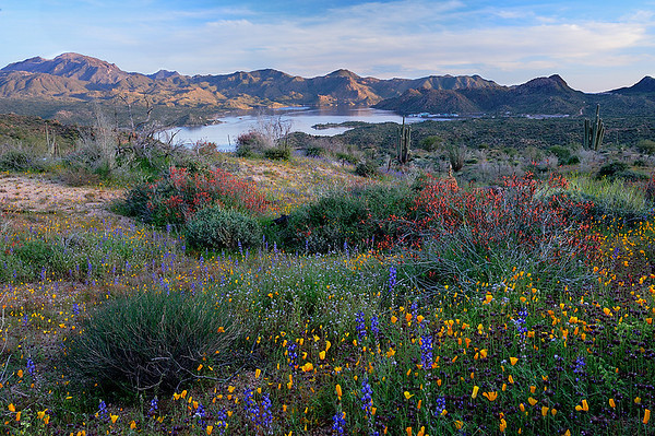 """HEART OF THE DESERT"" (Bartlett Lake, AZ) - When you see a scene like this - with all the blooming flowers, the lake and the glowing mountains - you immediately think of...Phoenix?!? This place is about 30 miles northeast of Phoenix, in the heart of the Sonoran desert."