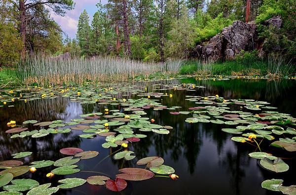 """MONET'S CANYON"" (Garland Prairie, AZ)"