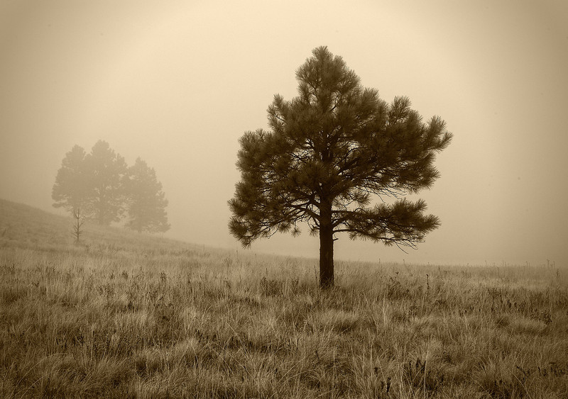 """A FOGGY NOTION"" (Hart Prairie, AZ) - A little experiment in old-school photography."