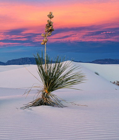 """DESERT PERFECTION"" (White Sands, NM)"