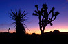 """JOSHUA TREE SUNRISE"" - A Joshua Tree and Yucca are silhouetted against a colorful sky in Joshua Tree NP."