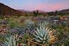 """AGAVE SUNRISE"" (Anza Borrego Desert, CA)"