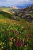 """SUMMER'S GLORY"" (San Juan Mountains, CO)"