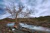 """STANDING STRONG"" (Dry Beaver Creek, Sedona, AZ)"