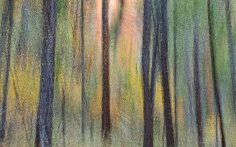 """WATERCOLOR FOREST"""