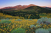 """SUNFLOWER SUNRISE"" - (San Francisco Peaks, AZ)"