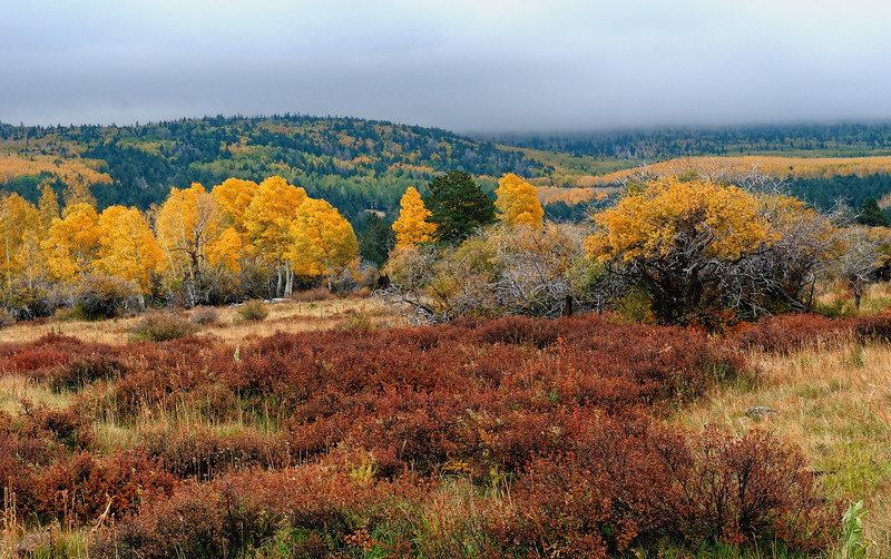"""AUTUMN'S APPROACH"" (Hart Prairie, AZ)"