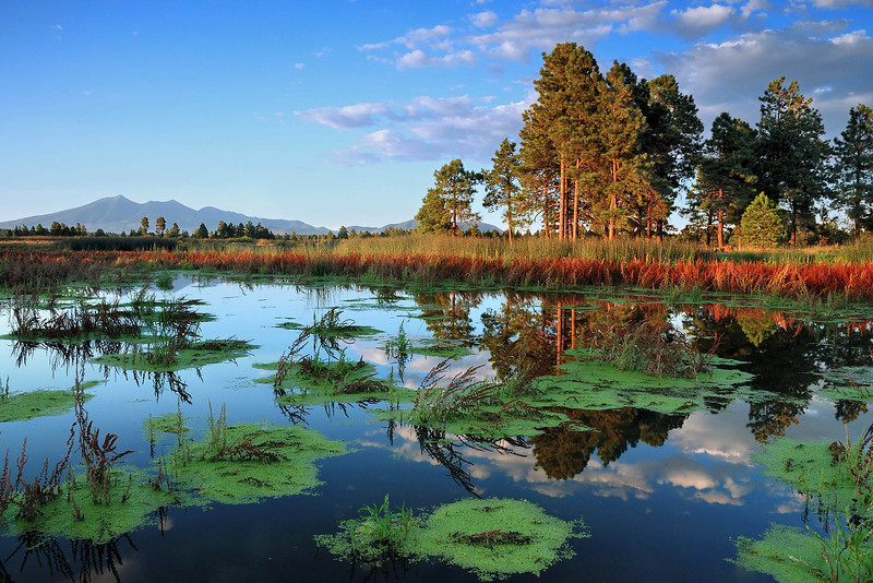 """KACHINA WETLANDS"" - (Kachina Wetlands: Flagstaff, AZ)"