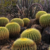"""THE LIVING DESERT"" (Desert Botanical Gardens, AZ)"