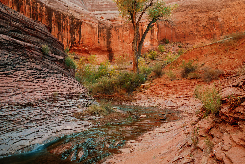 """WILLOW GULCH""  (Grand Staircase, UT)"
